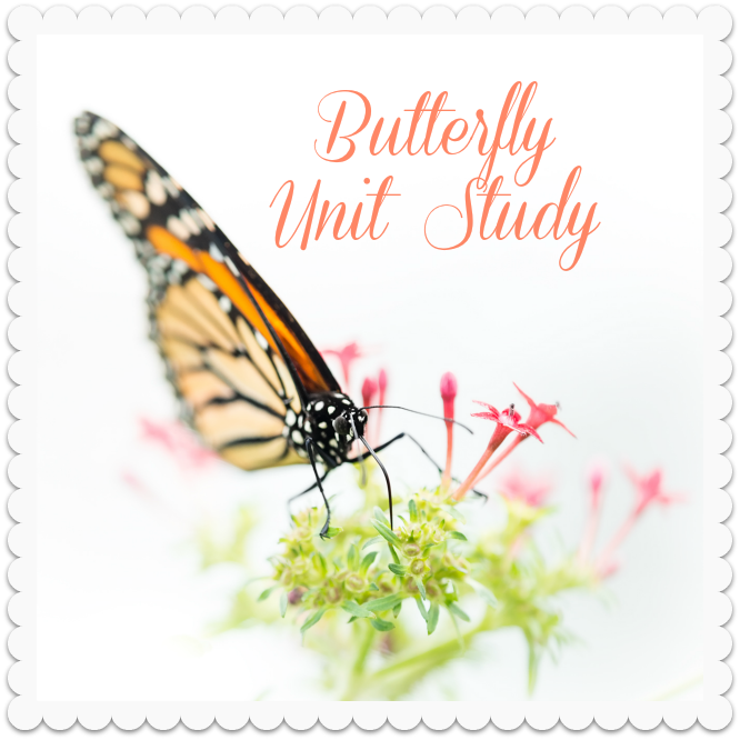 butterfly_unit.png
