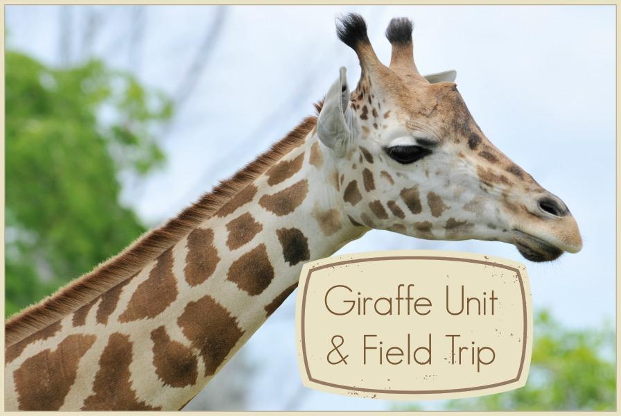 Giraffe mini unit